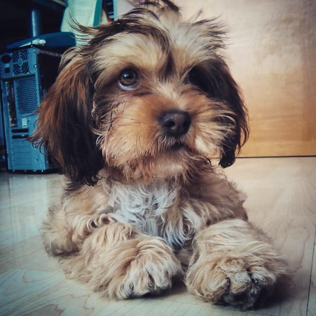 educar a un perro cachorro
