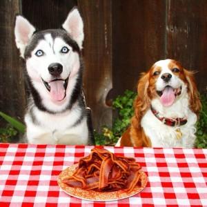 mejor alimentación para tu perro