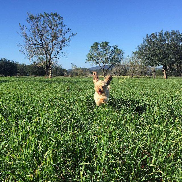 vacaciones rurales con perro